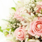 玫瑰与百合的故事