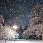 圣诞的雪花